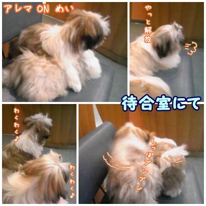 cats2009-05-28-02.jpg