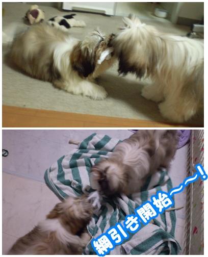 cats2009-05-29-03.jpg
