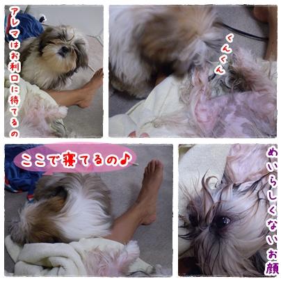 cats2009-05-31-02.jpg