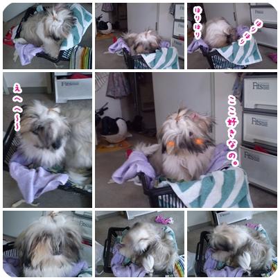 cats2009-06-02-01.jpg