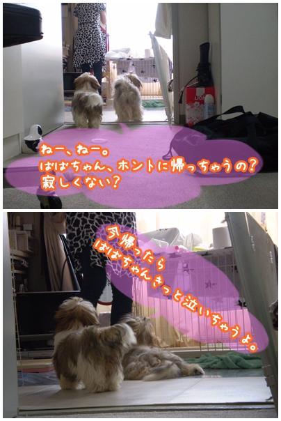 cats2009-06-04-01.jpg