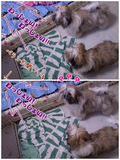 cats2009-06-06-01.jpg