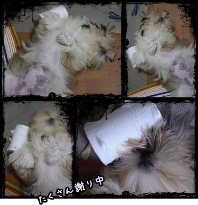 cats2009-06-07-01.jpg