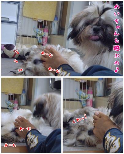 cats2009-06-08-01.jpg