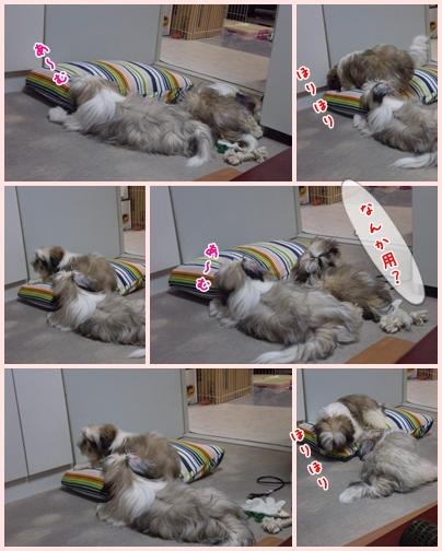 cats2009-06-10-01.jpg