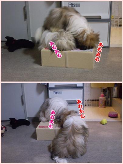 cats2009-06-12-01.jpg