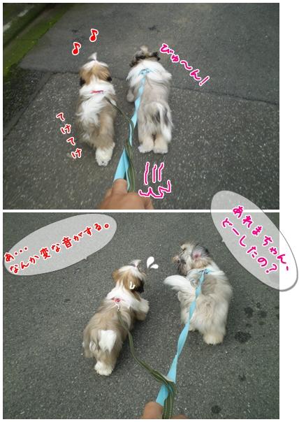 cats2009-06-15-01.jpg