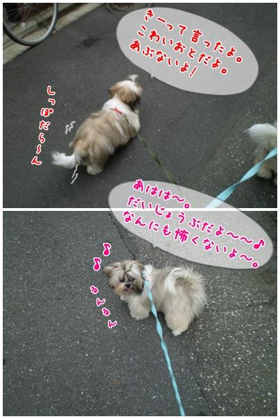 cats2009-06-15-02.jpg