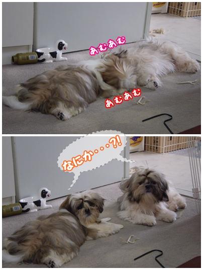 cats2009-06-18-01.jpg