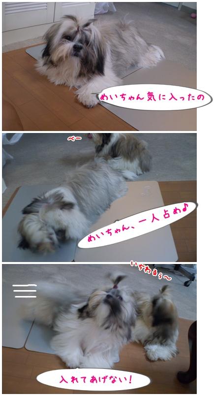 cats2009-06-30-01.jpg