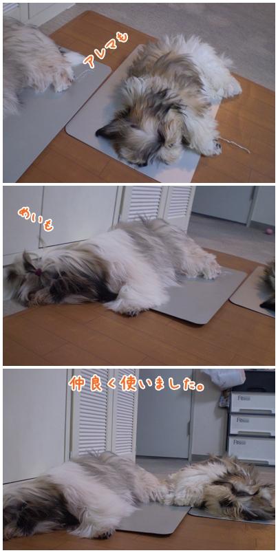 cats2009-06-30-02.jpg