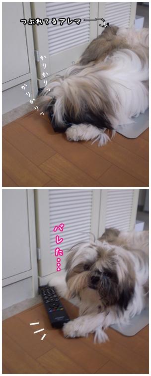 cats2009-07-01-01.jpg