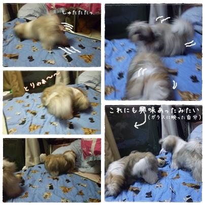cats2009-07-03-01.jpg