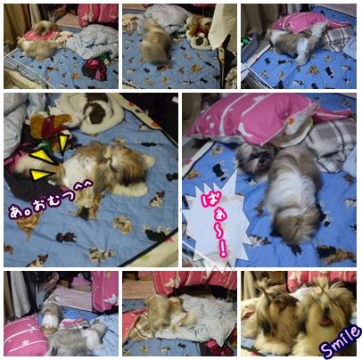 cats2009-07-03-02.jpg