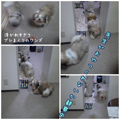 cats2009-07-06-01.jpg