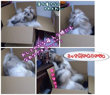 cats2009-07-06-02.jpg