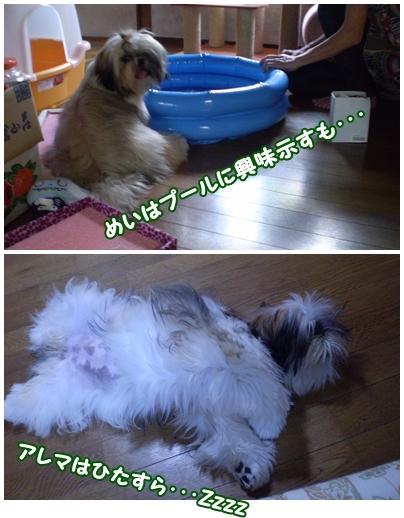 cats2009-07-17-03.jpg