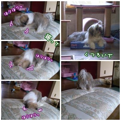 cats2009-07-18-04.jpg
