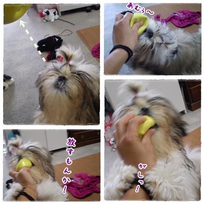 cats2009-07-23-01.jpg