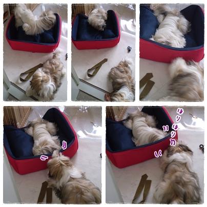 cats2009-07-24-01.jpg