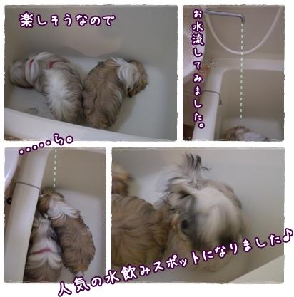 cats2009-07-30-01.jpg
