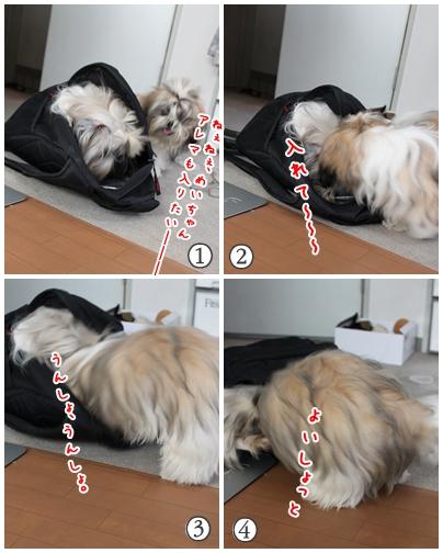 cats2009-08-07-02.jpg