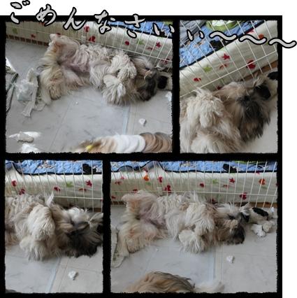 cats2009-08-10-02.jpg