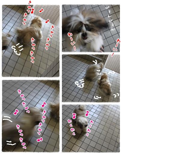 cats2009-08-12-02.jpg