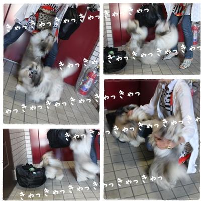 cats2009-08-12-04.jpg