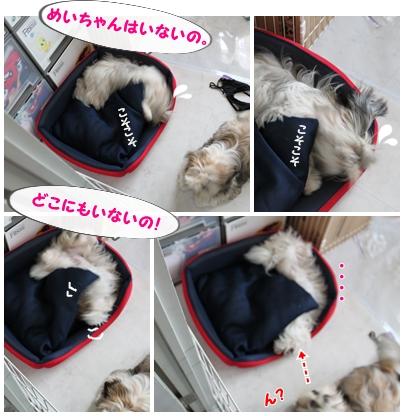 cats2009-08-13-01.jpg