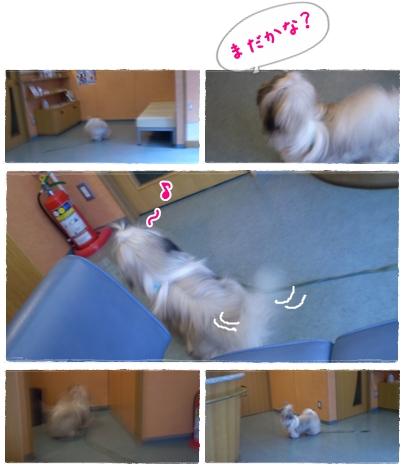 cats2009-08-20-02.jpg
