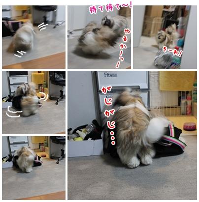 cats2009-08-23-01.jpg