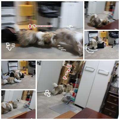 cats2009-08-23-02.jpg