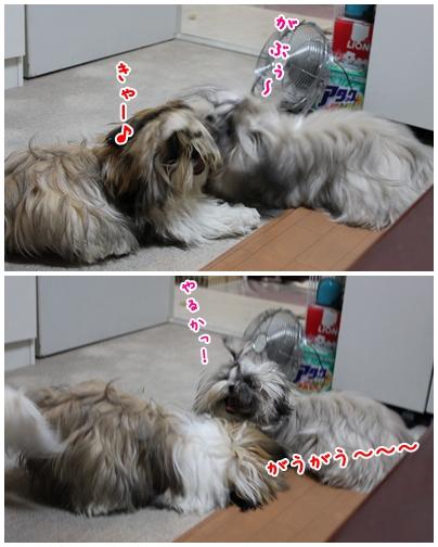 cats2009-08-23-03.jpg