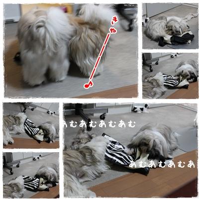 cats2009-08-31-02.jpg