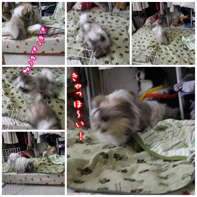 cats2009-08-31-03.jpg