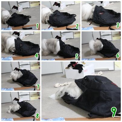cats2009-08-31-07.jpg
