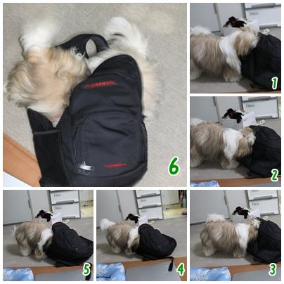 cats2009-08-31-08.jpg