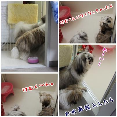 cats2009-09-03-02.jpg