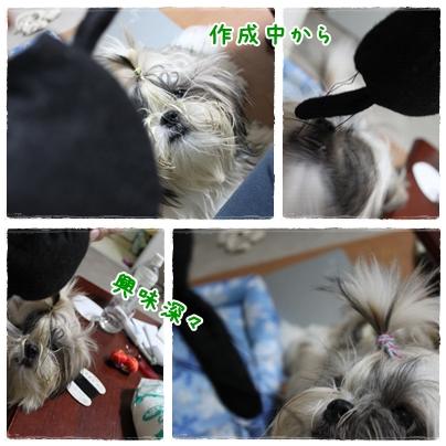 cats2009-09-06-02.jpg