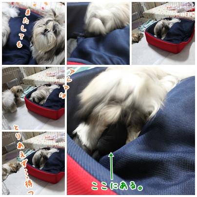 cats2009-09-06-03.jpg
