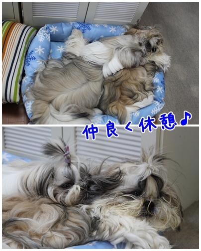 cats2009-09-07-02.jpg
