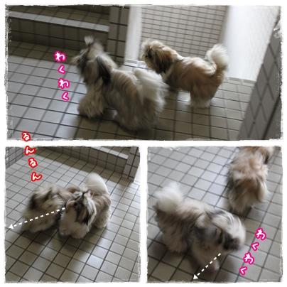 cats2009-09-08-02.jpg