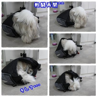 cats2009-09-12-02.jpg