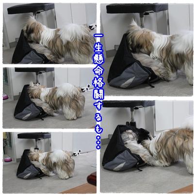 cats2009-09-12-03.jpg