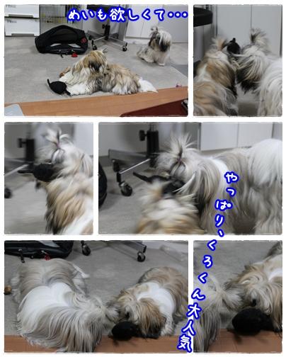 cats2009-09-12-04.jpg