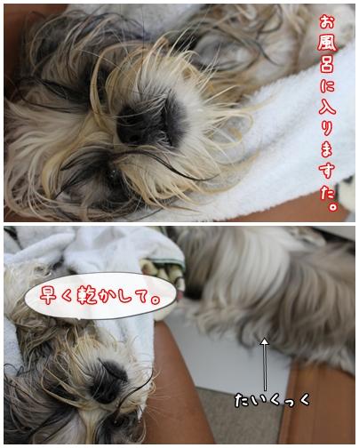 cats2009-09-13-02.jpg