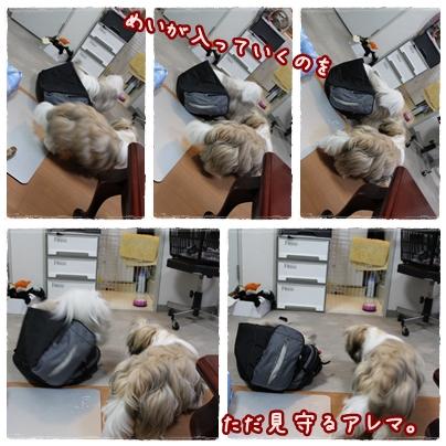 cats2009-09-14-01.jpg