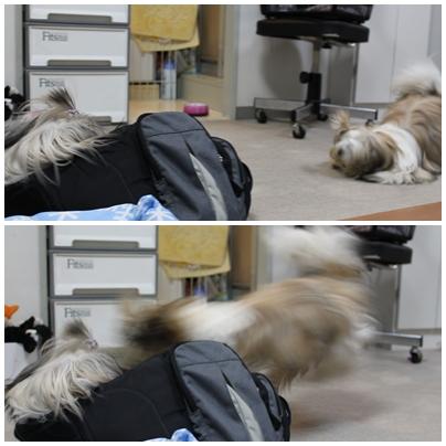 cats2009-09-14-02.jpg