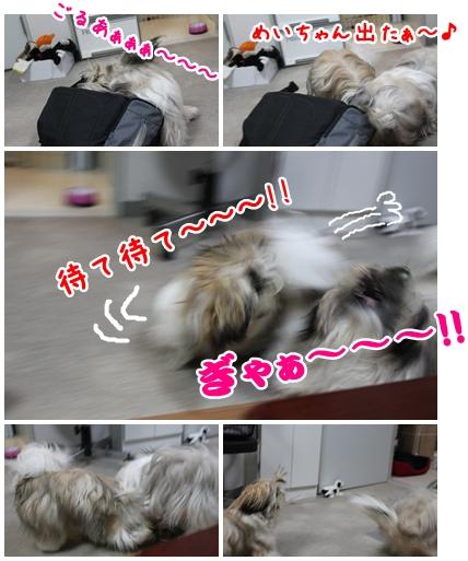 cats2009-09-14-03.jpg
